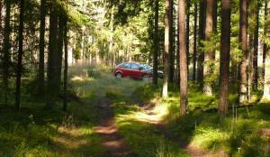 Miško tankmėje - automobilis. Vytauto Visocko nuotr.
