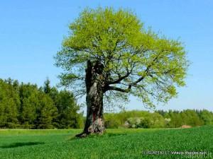Gamtos paminklas Nemunaičio apylinkėse