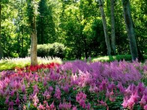 Botanikos sode (16)
