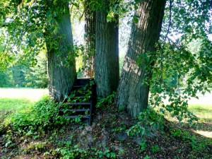 Botanikos sode (5)
