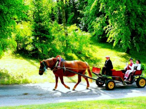 Arklio muziejaus šventėje (2)
