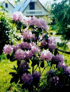 Neparduotos vasaros (8)