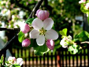 Pavasario žiedai