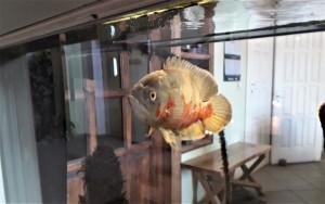 Žuvis akvariume. Slaptai.lt nuotr.
