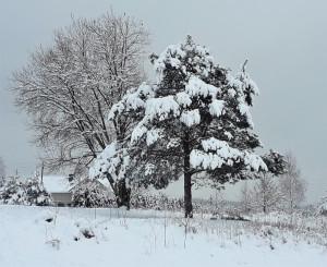 Medis. Slaptai.lt nuotr.